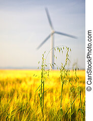 Field of yellow wheat with wind turbine in background