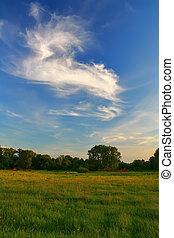 Field on a summer evening