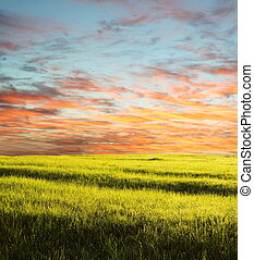 Field on sunset