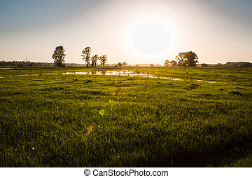 field on sunset