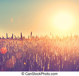 field., paisagem rural, sob, brilhar, luz solar