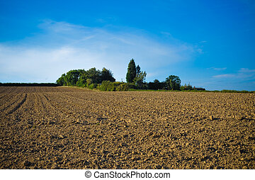Field - Plants and soil in a field