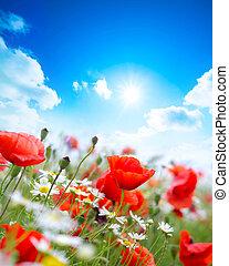 field poppy flower