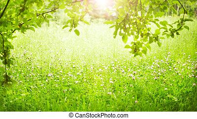 field., profondeur, peu profond, vert, grass.