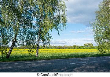 field., rapeseed, estrada
