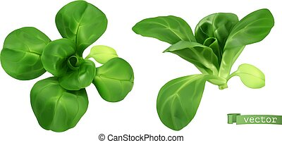 Field salad, corn salad or lamb's lettuce realistic vector objects. Food illustration