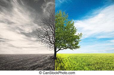 field - One tree in field