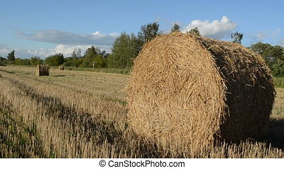 field straw roll bale - panorama view straw bales after...