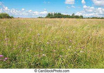 Field summer day