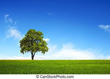 Field, tree and blue sky