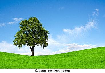 Field, tree and sky