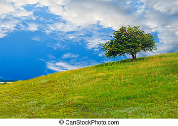 field tree green sky hill grass landscape blue summer spring nature meadow cloud