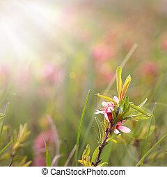 Field wild flowers closeup