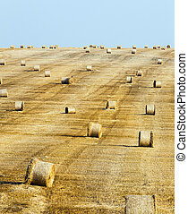 Field with a crop of cereals