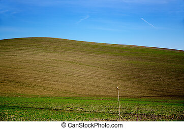 Field with a hill and blue sky