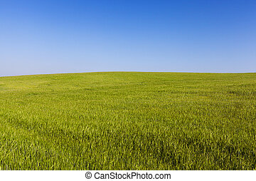Field with cereal