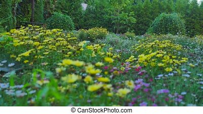 Field with colorful blooming wild spring flowers