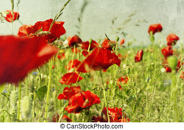 Field with flower of the poppy