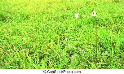 Field with flowers on a wind. Beautiful blue wild flowers
