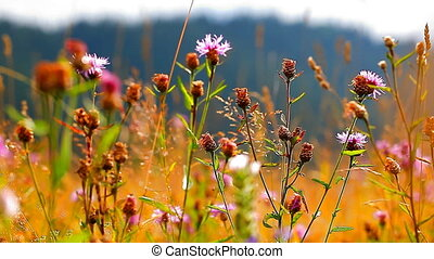 field with flowers swaying in the wind
