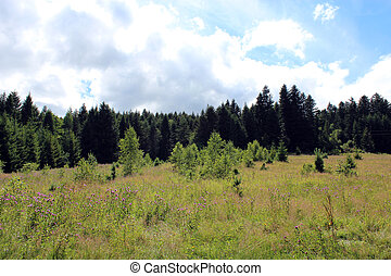 field with grass and forest on the background