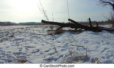 Field with grass frozen and away the Russia dead trees...