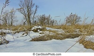 Field with grass frozen and snow away Russia dead trees...