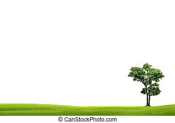 Field with green grass and tree