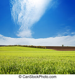 field with green grass under cloudy sky