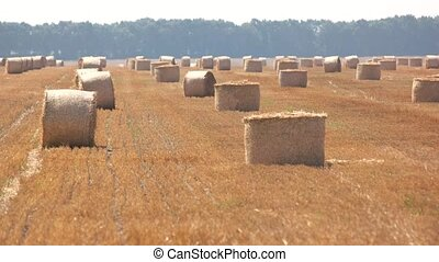 Field with hay stacks. Sunshine and yellow straw. Vasts of...