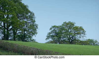 Field With Large Trees In Windy Rural Landscape - Grassy...