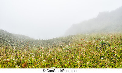 field with misty on moutain