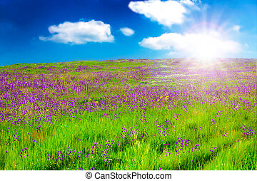 Field With Purple Flowers At Sunsrise
