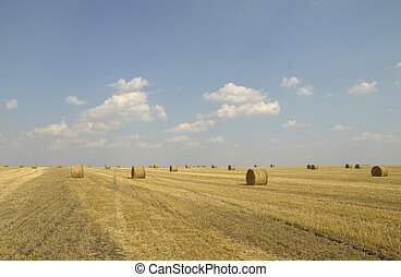 field with rolls of straw