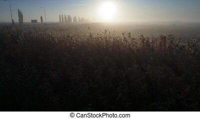 field with tall grass, and the sunrise - camera flies into a...