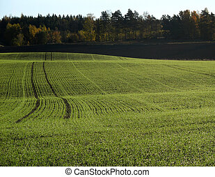 Field with tractor tracks