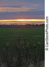 Field with tractor tracks near Greifswald, Germany