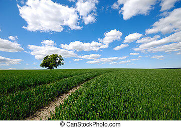 Field with tree on hill