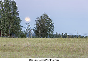 Field with Trees and Moon