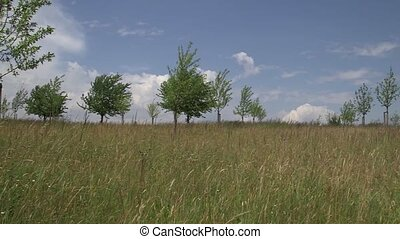 field with trees on a sunny day