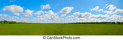Field with wheat sprouts. Beautiful cloudy sky