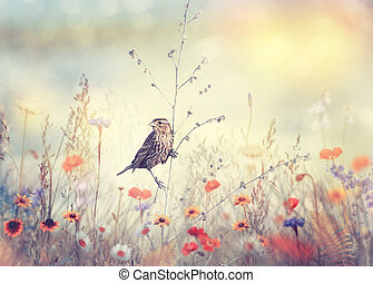 Field with wild flowers and a bird