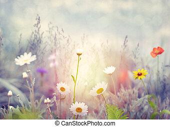 Field with wild flowers