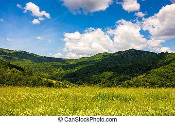 field with wild herbs in summer mountain landscape - field...