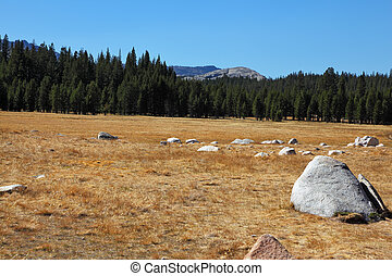 Fields and mountains in Yosemite park