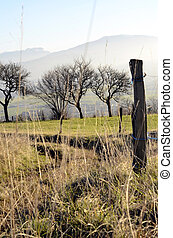 Fields and trees, Annecy, France - Fields and trees, rural...