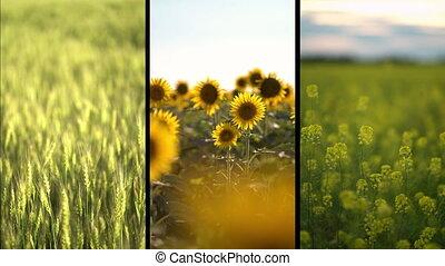 fields., collage