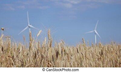 fields., haut, fermes, rural, fond, fin, agricole, vent, secteurs