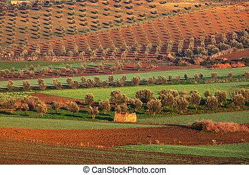 fields in Morocco