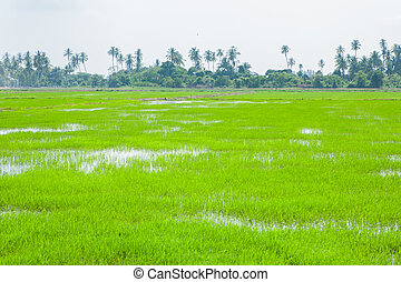 Fields in Penang, Malaysia